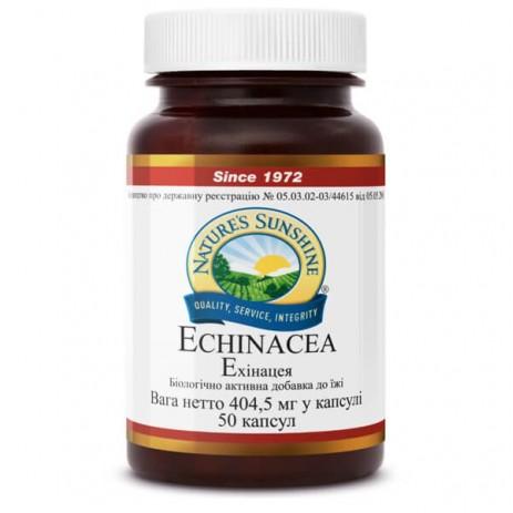 Эхинацея НСП |  Echinacea NSP