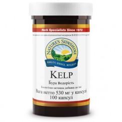 Келп (Бурая водоросль)  | Kelp